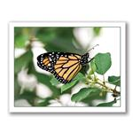 Photo Greeting Card Of Butterfly by Kurt Neumann
