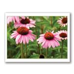 Photo Greeting Card Of Cone Flowers by Kurt Neumann