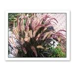 Photo Greeting Card Of A Flowering Plant by Jerry Cohen