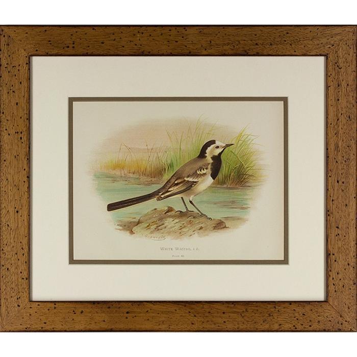 framed artwork White Wigtail bird